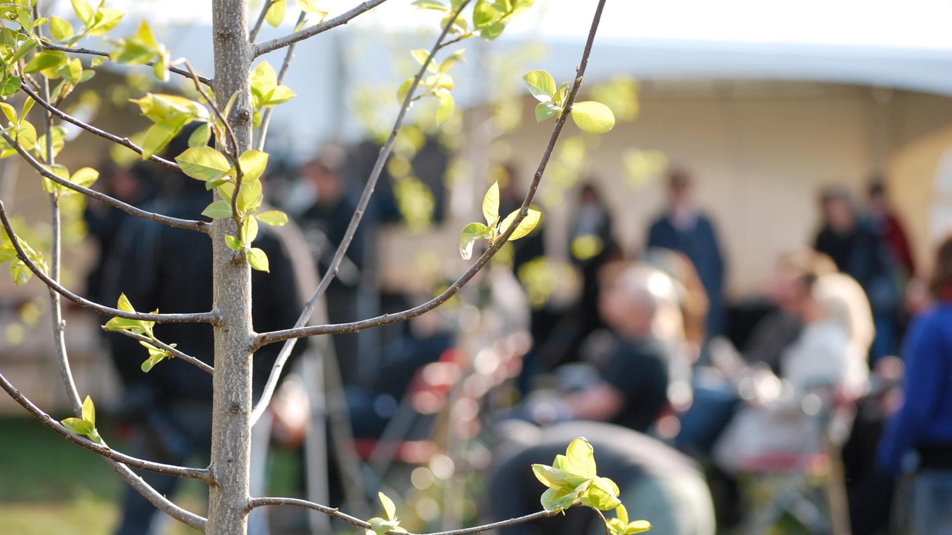 Les_fetes_de_quartiers_375000_arbres_celebration_jour_de_La_terre_quebec_22_avril