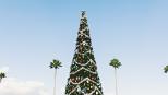jour_de_la_terre_quebec_qc_blogue_article_Pour_un_Noël_écolo_sapin_naturel_ou_artificiel__palmiers