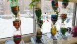 Blogue_article_qc_comment_porter_lespoi_aupres_touts_petits_plante_2