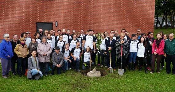 Projet de verdissement effectué par ABCP architecture pour souligner leur 30e anniversaire. 37 arbres ont été plantés en septembre 2018 sur le terrain d'un logement de l'Office municipal d'habitation de Québec (OMHQ).