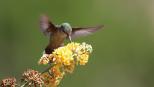 jour_de_la_terre_canada_blogue_la_protection_des_pollinisateurs_