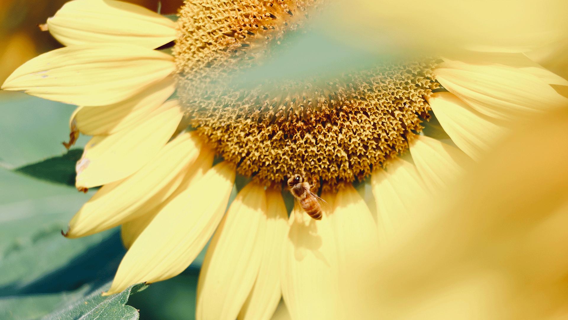 jour_de_la_terre_canada_blogue_la_protection_des_pollinisateurs_3