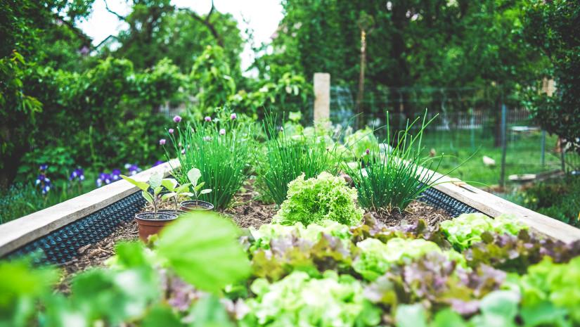 Image_Potager_TV5_Plus_quun_jardin