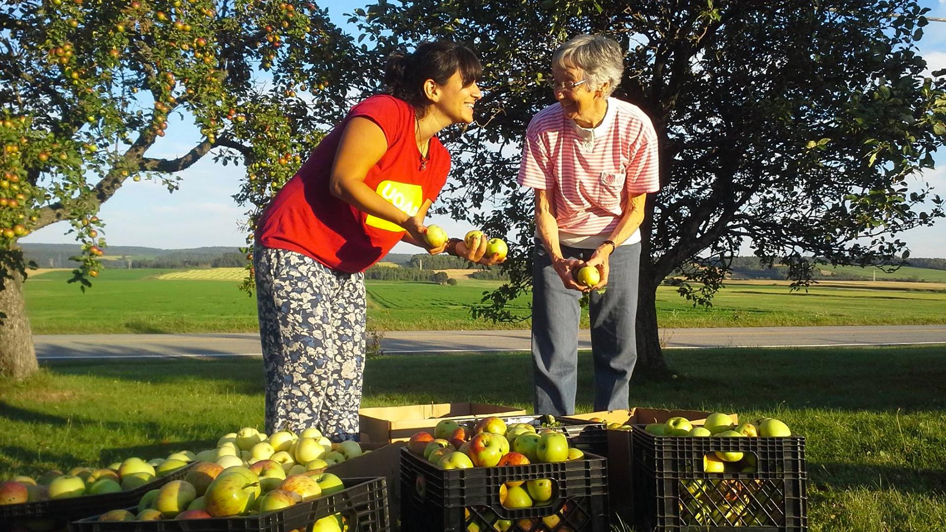 Deux madames avec les pommes_1920x1080