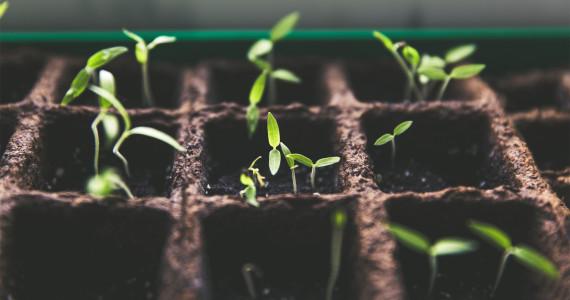 Calendrier_Jour_de_la_terre_jardinage_semis_feuilles_plantes (1)